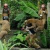 Wild Leopard Attack A Village