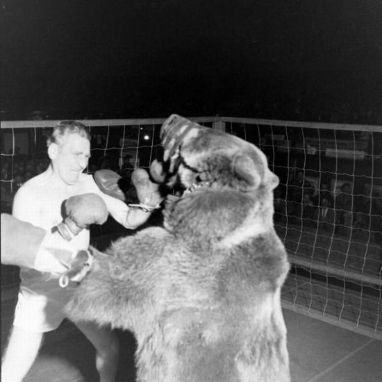 Bear Vs Man