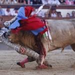 During Bullfight