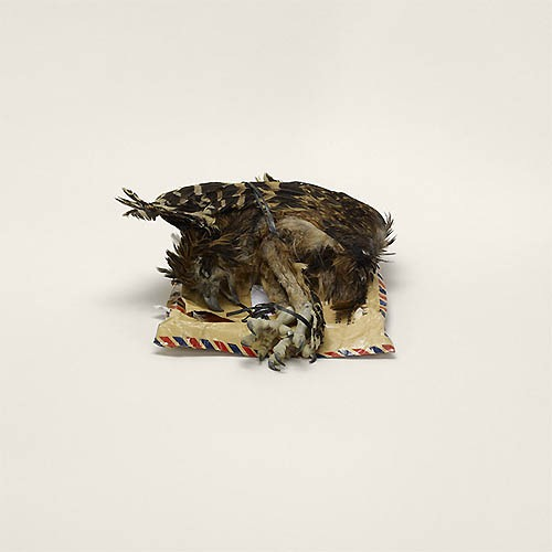 Bird corpse, labeled as home décor, Indonesia to Miami, Florida (prohibited)