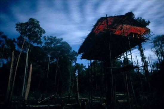 Korowai Tree House