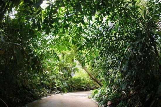 Tropical Island Resort